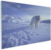 Poolvos in de sneeuw Glas 90x60 cm - Foto print op Glas (Plexiglas wanddecoratie)