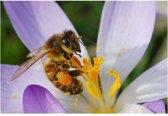 Veldbloemen Tubinger bijenmengsel 250 gram