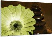 Glasschilderij Bloem | Wit, Bruin, Groen | 120x70cm 1Luik | Foto print op Glas |  F002584