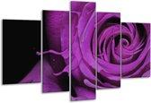 Glasschilderij Roos   Paars, Zwart   170x100cm 5Luik   Foto print op Glas    F004153