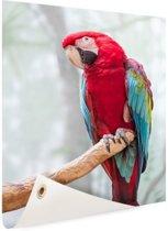 Rode ara fotoafdruk Tuinposter 40x60 cm - Foto op Tuinposter / Schilderijen voor buiten (tuin decoratie)