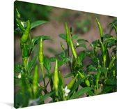 De groene chilipeperbloemen Canvas 140x90 cm - Foto print op Canvas schilderij (Wanddecoratie woonkamer / slaapkamer)