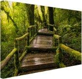 FotoCadeau.nl - Mooi regenwoud en jungle Canvas 80x60 cm - Foto print op Canvas schilderij (Wanddecoratie)