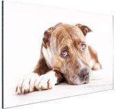 Liggende hond  Aluminium 120x80 cm - Foto print op Aluminium (metaal wanddecoratie)