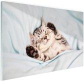 Slapend katje Glas 60x40 cm - Foto print op Glas (Plexiglas wanddecoratie)