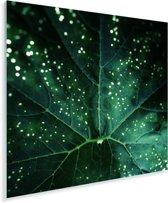 Bladdetail van courgetteplanten Plexiglas 90x90 cm - Foto print op Glas (Plexiglas wanddecoratie)