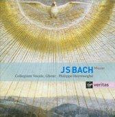 Bach Masses BWV Vol. 233, 235
