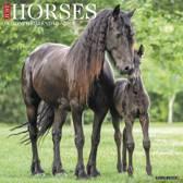 Just Horses 2019 Wall Calendar