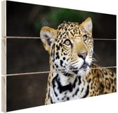 Nieuwsgierige luipaard foto Hout 60x40 cm - Foto print op Hout (Wanddecoratie)