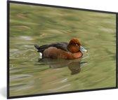 Foto in lijst - Een witoogeend zwemt in groen water fotolijst zwart 60x40 cm - Poster in lijst (Wanddecoratie woonkamer / slaapkamer)