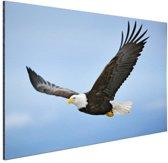 Adelaar tijdens vlucht foto Aluminium 120x80 cm - Foto print op Aluminium (metaal wanddecoratie)
