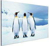 Drie pinguins portret Aluminium 120x80 cm - Foto print op Aluminium (metaal wanddecoratie)