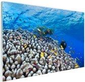 Onderwater rif met vissen Glas 180x120 cm - Foto print op Glas (Plexiglas wanddecoratie) XXL / Groot formaat!