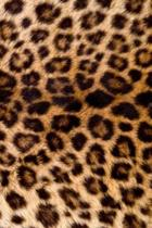 2019 Daily Planner Leopard Print Faux Texture 384 Pages
