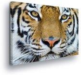 Tiger Canvas Print 100cm x 75cm
