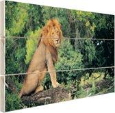 Leeuw zit op een tak Hout 160x120 cm - Foto print op Hout (Wanddecoratie) XXL / Groot formaat!