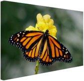 Monarchvlinder Canvas 120x80 cm - Foto print op Canvas schilderij (Wanddecoratie)