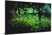 Miljoenen vuurvliegjes in een bos Aluminium 180x120 cm - Foto print op Aluminium (metaal wanddecoratie) XXL / Groot formaat!
