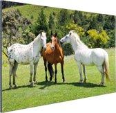 Drie paarden Aluminium 30x20 cm - klein - Foto print op Aluminium (metaal wanddecoratie)