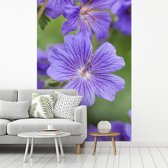 Fotobehang vinyl - Paarse geranium bloemen in volle bloei breedte 270 cm x hoogte 400 cm - Foto print op behang (in 7 formaten beschikbaar)