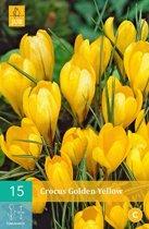 Crocus Golden Yellow - grootbloemige krokus - 4 sets