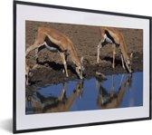 Foto in lijst - Twee drinkende Gazelle's in Afrika fotolijst zwart met witte passe-partout klein 40x30 cm - Poster in lijst (Wanddecoratie woonkamer / slaapkamer)
