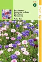 2 stuks Centaurea Cyanus Polka Dot Gemengd