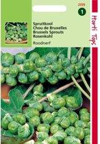 Spruitkool Roodnerf - Brassica oleracea - set van 10 stuks