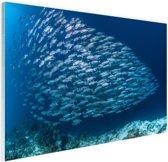 School met vissen Glas 180x120 cm - Foto print op Glas (Plexiglas wanddecoratie) XXL / Groot formaat!