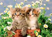 Jumbo Kittige Katjes 1000