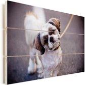 Een schattige Shih Tzu hond Vurenhout met planken 90x60 cm - Foto print op Hout (Wanddecoratie)