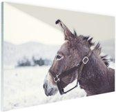 FotoCadeau.nl - Ezel in de sneeuw Glas 90x60 cm - Foto print op Glas (Plexiglas wanddecoratie)
