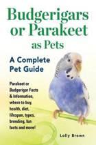 Budgerigars or Parakeet as Pets