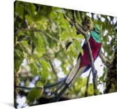 Quetzal op een tak Canvas 140x90 cm - Foto print op Canvas schilderij (Wanddecoratie woonkamer / slaapkamer)