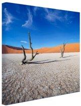 Oude bomen in de woestijn Canvas 100x100 cm - Foto print op Canvas schilderij (Wanddecoratie)