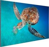 Groene schildpad met kwal Aluminium 90x60 cm - Foto print op Aluminium (metaal wanddecoratie)
