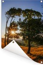 De zon schijnt door de bomen in het Engelse Nationaal park South Downs Tuinposter 80x120 cm - Tuindoek / Buitencanvas / Schilderijen voor buiten (tuin decoratie)