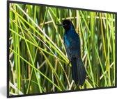 Foto in lijst - Zwarte bootstaarttroepiaal tussen het groene gras fotolijst zwart 60x40 cm - Poster in lijst (Wanddecoratie woonkamer / slaapkamer)