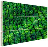 Theeplantages India Hout 80x60 cm - Foto print op Hout (Wanddecoratie)