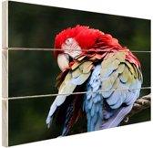 Rood en groene ara Hout 120x80 cm - Foto print op Hout (Wanddecoratie)
