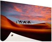 Woestijn met kamelen Tuinposter 120x80 cm - Tuindoek / Buitencanvas / Schilderijen voor buiten (tuin decoratie)