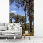 Fotobehang vinyl - Pijnbomen in het Nationaal park Doñana in Spanje breedte 270 cm x hoogte 400 cm - Foto print op behang (in 7 formaten beschikbaar)