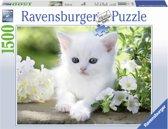 Ravensburger puzzel wit poesje 1500 stukjes