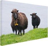 Schaap met lam in Denemarken Canvas 30x20 cm - Foto print op Canvas schilderij (Wanddecoratie woonkamer / slaapkamer) / Dieren Canvas Schilderij