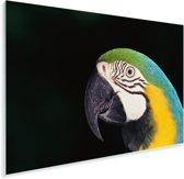 Close-up van een blauwkeelara met zwarte achtergrond Plexiglas 30x20 cm - klein - Foto print op Glas (Plexiglas wanddecoratie)