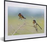 Foto in lijst - Twee boerenzwaluwen zitten op een tak fotolijst zwart met witte passe-partout klein 40x30 cm - Poster in lijst (Wanddecoratie woonkamer / slaapkamer)
