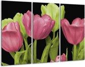 Glasschilderij Tulpen | Roze, Groen, Zwart | 120x80cm 3Luik | Foto print op Glas |  F003183