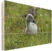 Schattige baby trompetzwaan in het gras Vurenhout met planken 120x80 cm - Foto print op Hout (Wanddecoratie)