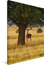Wild dier in het Nationaal park Cabañero in Spanje Canvas 40x60 cm - Foto print op Canvas schilderij (Wanddecoratie woonkamer / slaapkamer)