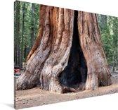 Oude boomstam in het Nationaal park Sierra Nevada in Noord Amerika Canvas 30x20 cm - klein - Foto print op Canvas schilderij (Wanddecoratie woonkamer / slaapkamer)
